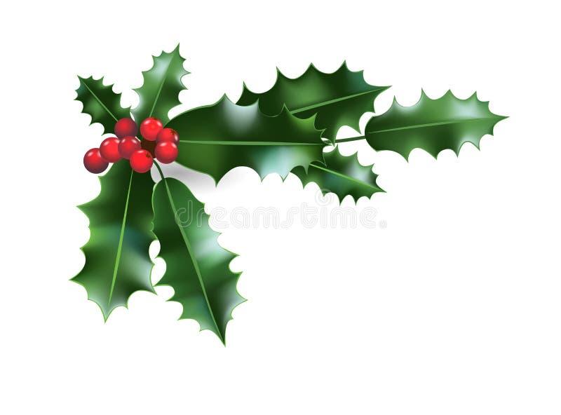 Holly Christmas decoration vector illustration