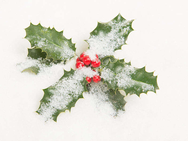 Holly ilex, διακόσμηση Χριστουγέννων με το κόκκινο μούρο ` s στοκ εικόνα
