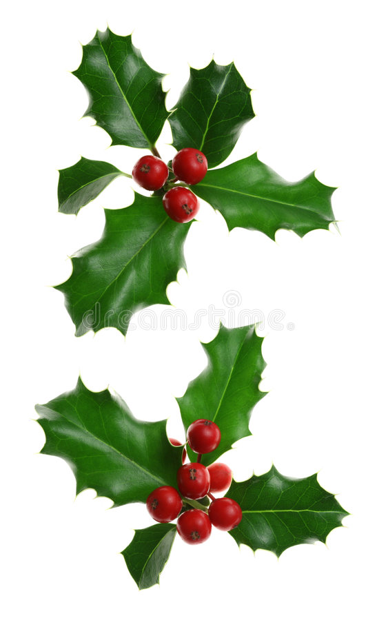 Holly Isolated on White royalty free stock images