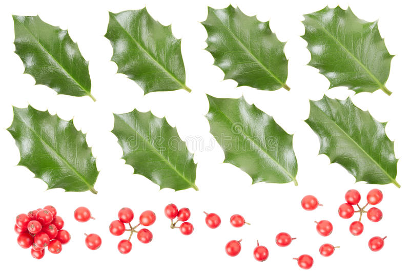 Holly leaves and berries collection. Isolated on white, clipping path included stock image