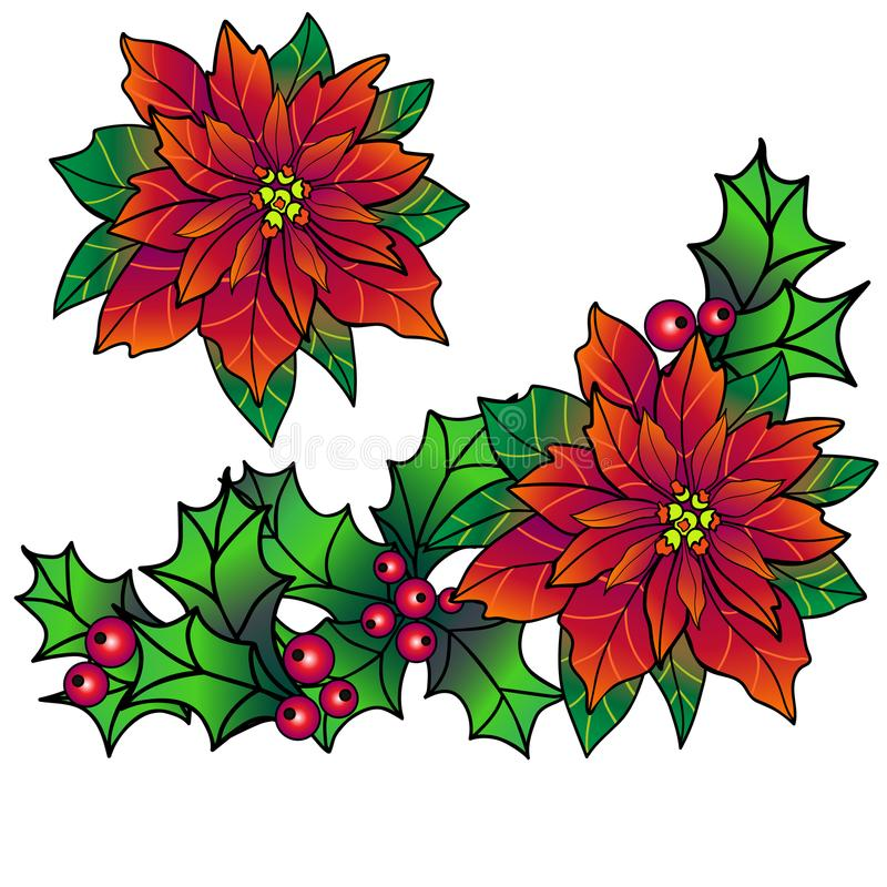 Christmas garland from evergreen plants. poinsettia. Christmas wreath of holly and poinsettia. A holly. leaves and berries stock illustration