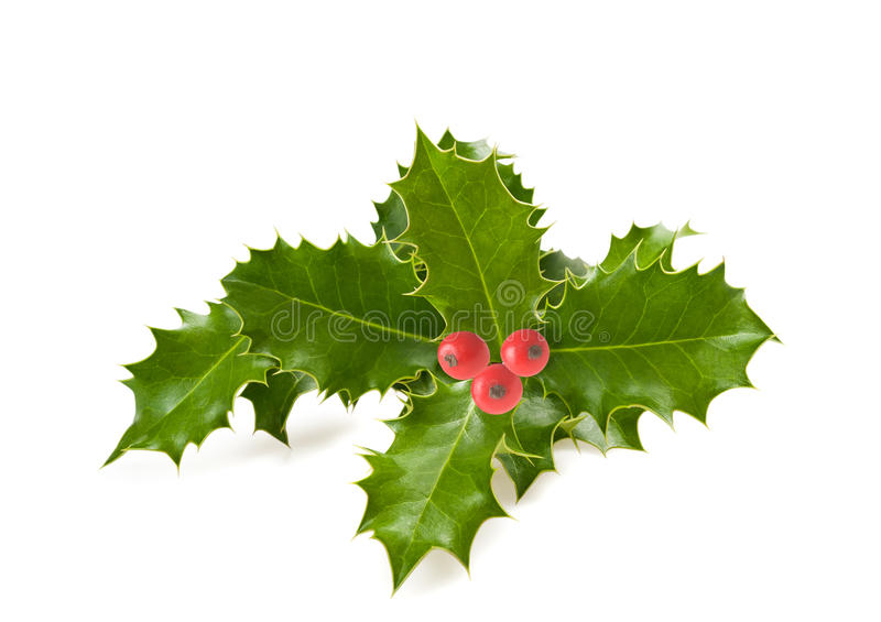 Download Holly Leaves Stock Photo - Image: 44774753