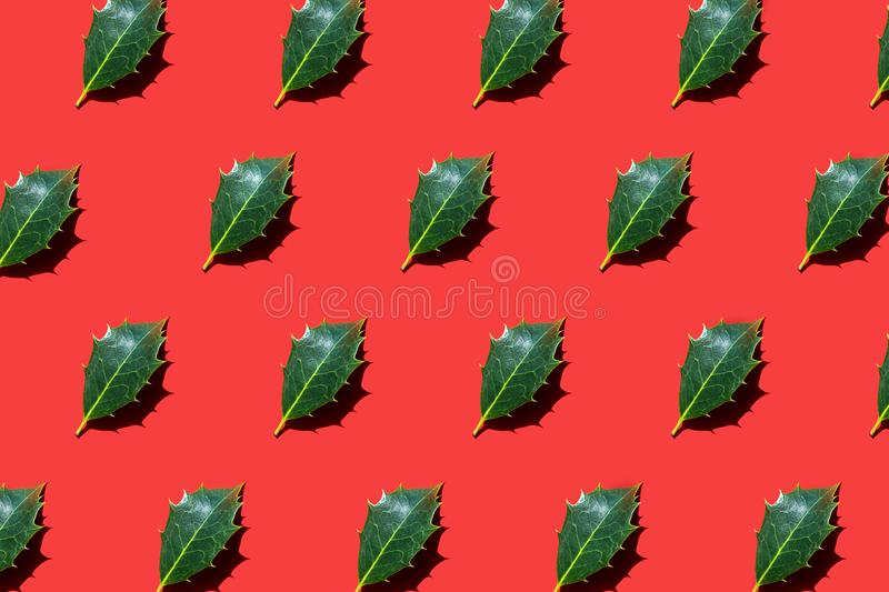 Holly leaves lying diagonally on red background. Holly leaves lying diagonally on bright red background. Trendy sunlight autumn and winter photo pattern. Minimal royalty free stock image