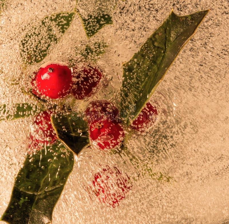 Holly Leaves och Berries i Ice arkivbild