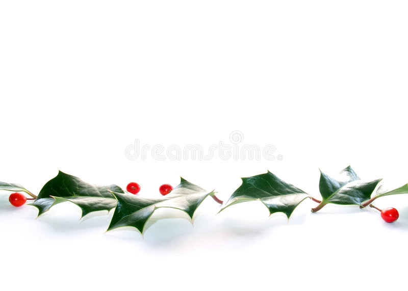 Holly line royalty free stock photography