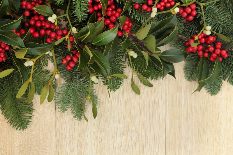 Holly and Mistletoe Border. Holly, mistletoe and fir background border over oak wood stock photo