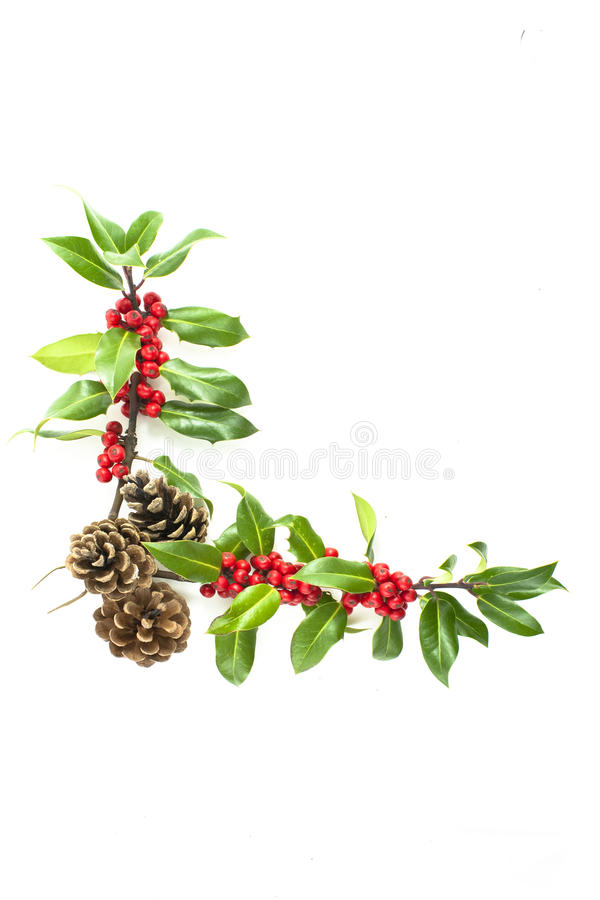 Holly and red berries corner motif stock images