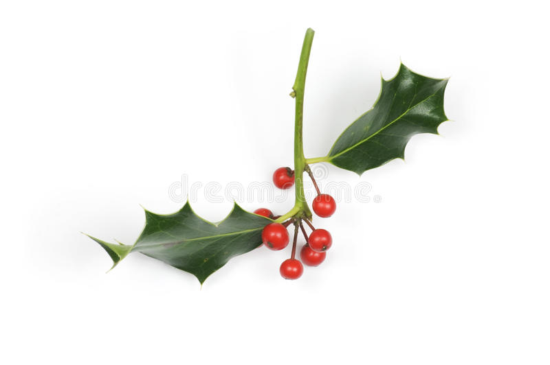 Holly_sprig_small_isolated imagem de stock