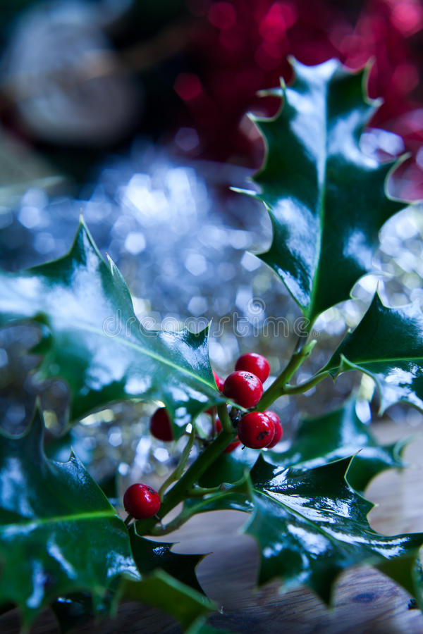 Holly twig. With fruits. Christmas decoration. Typical, traditional decoration bush. MAcro perspective, background, nobody. Christmas preparation, Christmas eve royalty free stock image