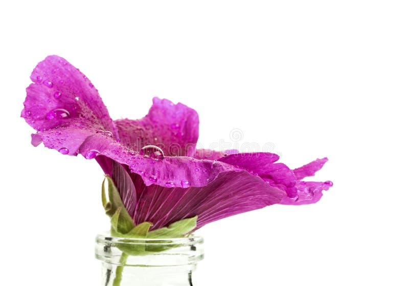 Download Hollyhock kwiat zdjęcie stock. Obraz złożonej z macro - 57667110
