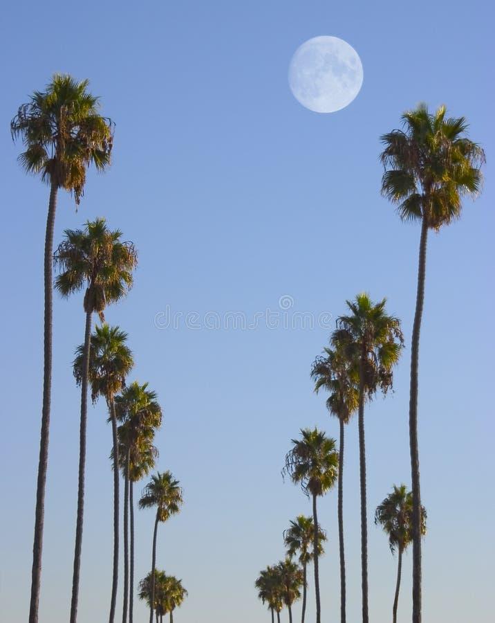 hollywood παράδεισος στοκ φωτογραφίες