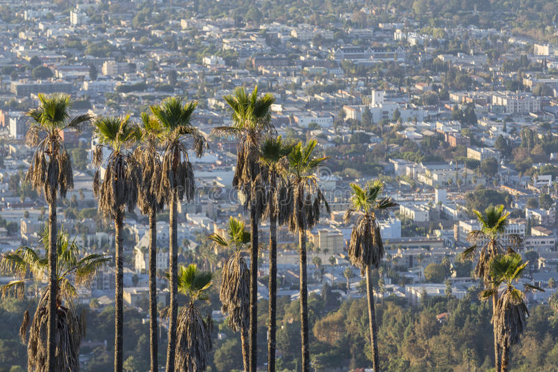 Download Hollywood Hillside Palms stock photo. Image of california - 34906008