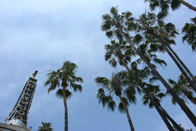 Hollywood und palmtrees lizenzfreie stockfotografie