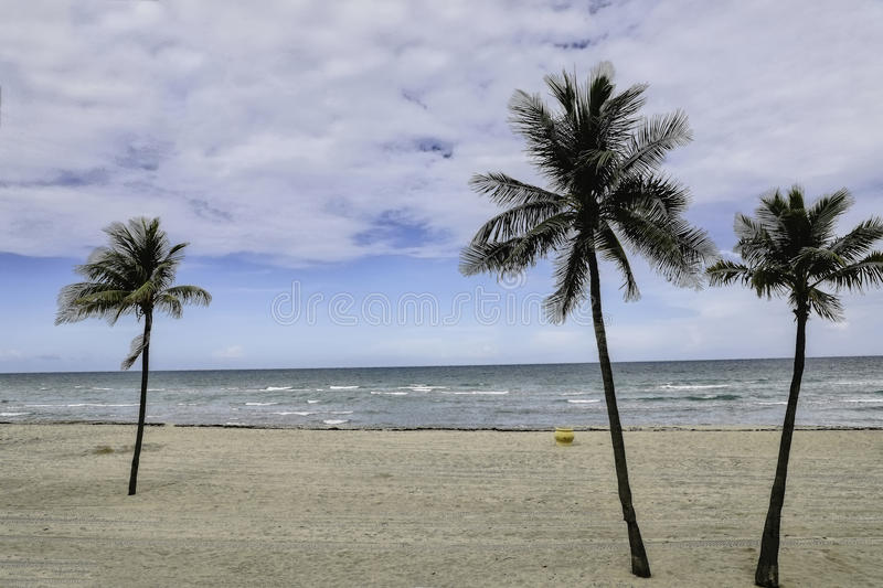 Hollywoodstrand FL Palm drie stock foto's