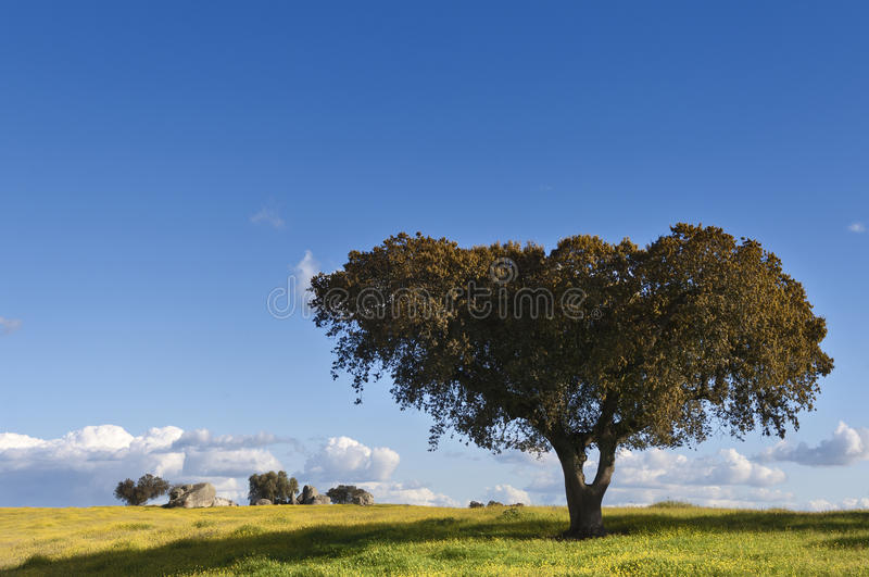 Download Holm oak stock image. Image of portugal, horizon, country - 28531499