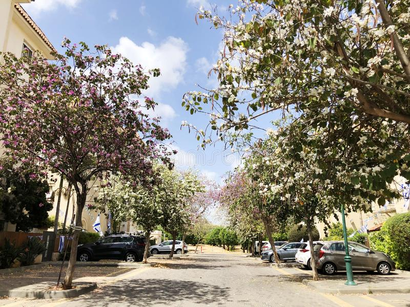 HOLON, ISRAEL  April 02, 2019: Private houses, trees and streets in Holon, Israel.  royalty free stock image
