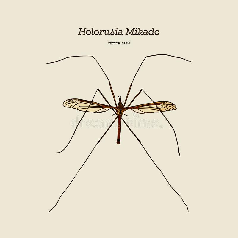Holorusia-mikado, Klasse des größten wahren Langläufers Skizzenvektor des Handabgehobenen betrages vektor abbildung