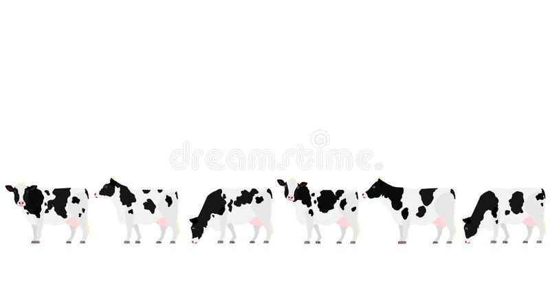 Holstein Friesian cattle in a row side view. Cute Holstein cows with big udder group on white vector illustration