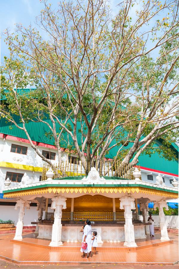 Holy ficus religiosa tree shrine near buddhist temple in Sri Lan. DAMBULLA, SRI LANKA - NOV 2016: Holy ficus religiosa tree shrine near buddhist temple with royalty free stock images