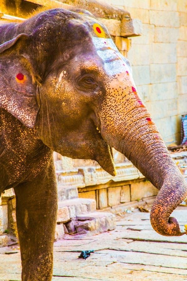 Holy Indian Elephant in Hampi, India royalty free stock image