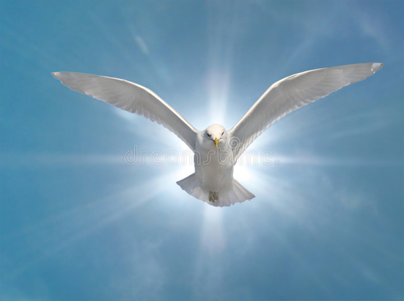 Download Holy Spirit stock photo. Image of peaceful, spread, baptism - 8469788