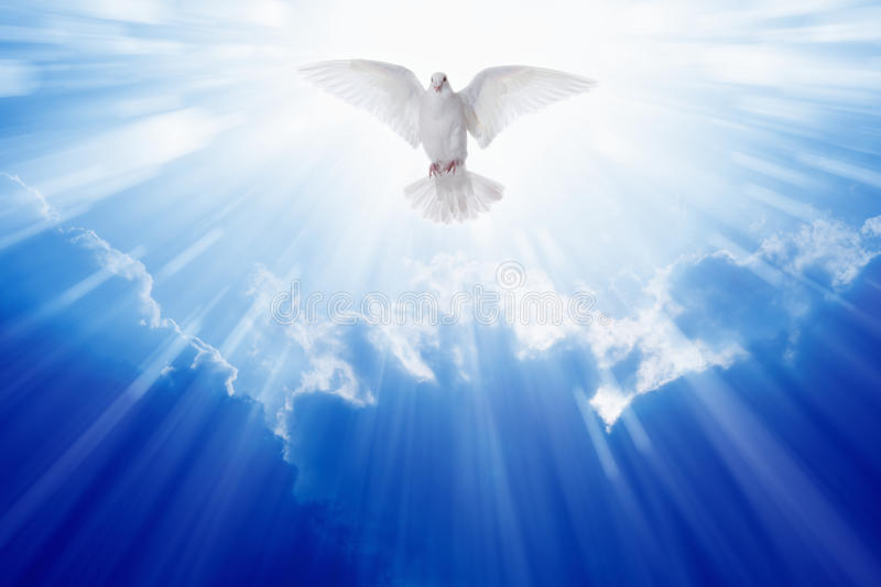 Holy spirit dove. Flies in blue sky, bright light shines from heaven, christian symbol