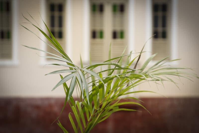 Holy Week Palm Sunday. Holy Week. Traditional Catholic celebration Palm Sunday. Christian faith stock image