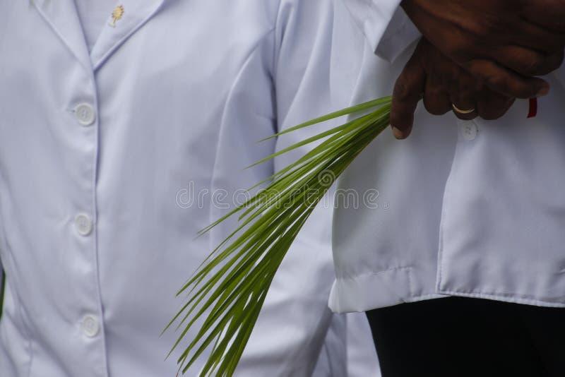 Holy Week Palm Sunday. Holy Week. Traditional Catholic celebration Palm Sunday. Christian faith royalty free stock images