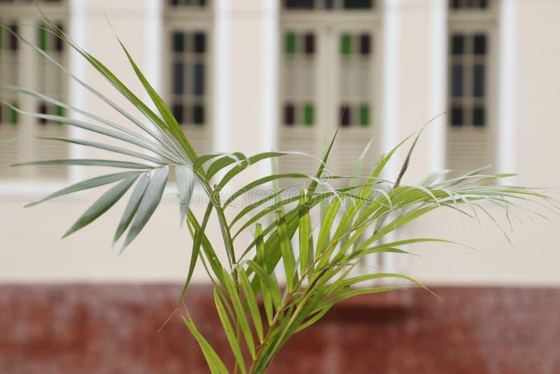 Holy Week Palm Sunday. Holy Week. Traditional Catholic celebration Palm Sunday. Christian faith stock photo