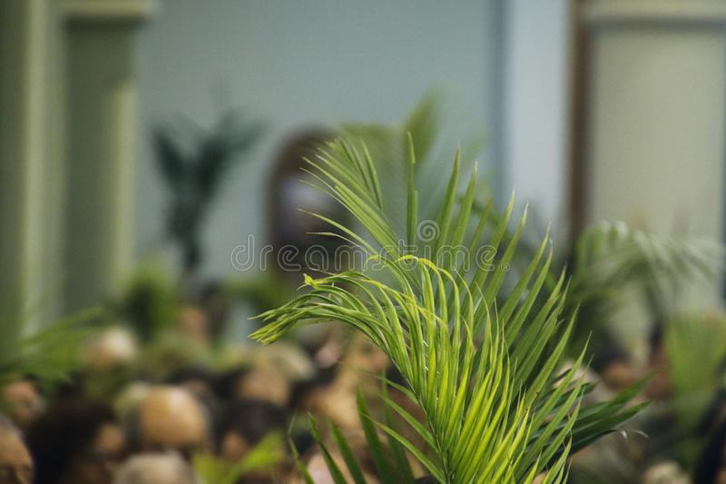 Holy Week Palm Sunday. Holy Week. Traditional Catholic celebration Palm Sunday. Christian faith royalty free stock photo