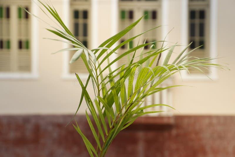 Holy Week Palm Sunday. Holy Week. Traditional Catholic celebration Palm Sunday. Christian faith stock photography