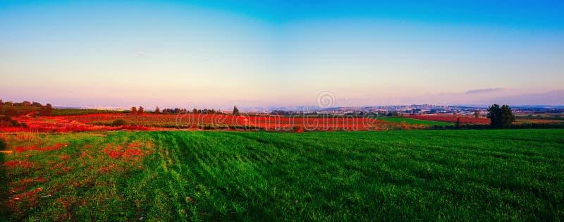 Holyland系列中央以色列全景 免版税库存照片