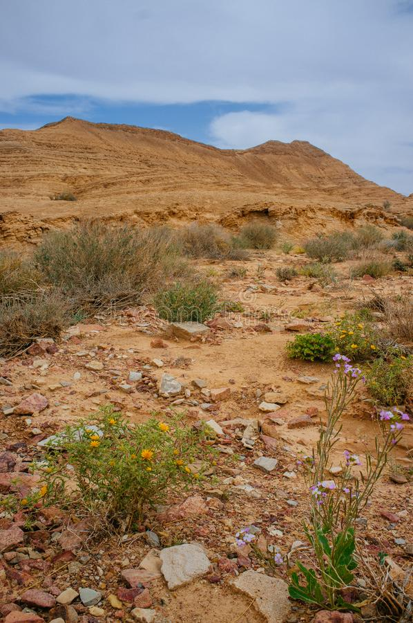 Holyland serie pustynny okwitnięcie 24 - Ramon krater Makhtesh - fotografia royalty free