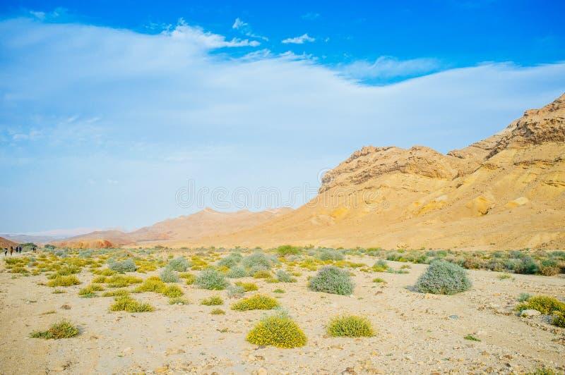 Holyland serie pustynny okwitnięcie 10 - Ramon krater Makhtesh - fotografia royalty free