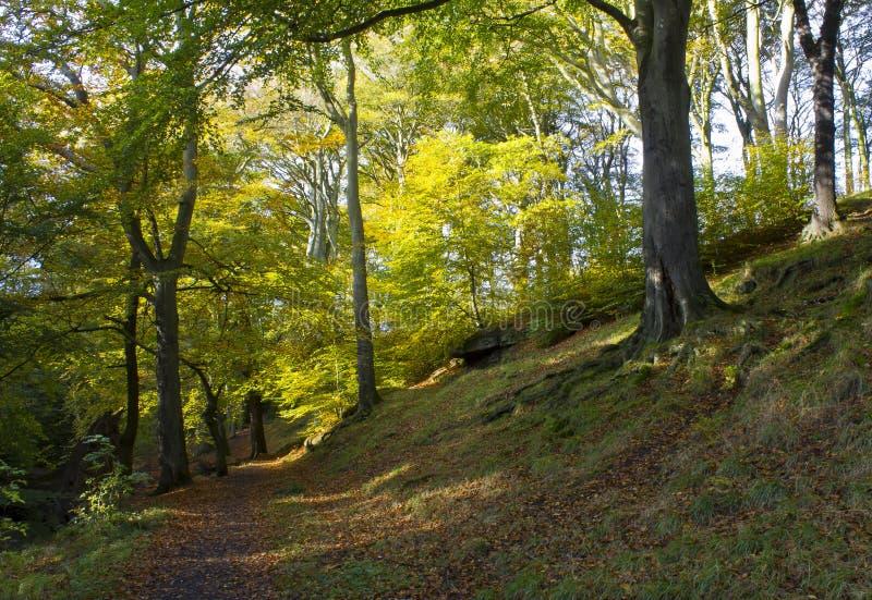 Holywell Dene, Holywell, Northumberland fotografia de stock