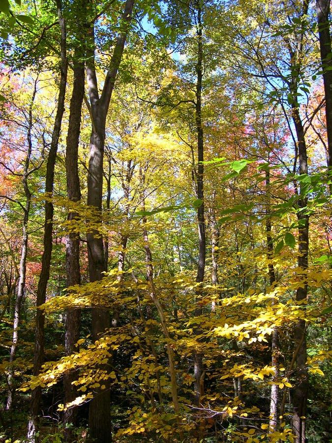 Download Holz stockbild. Bild von fall, laub, baum, nave, holz, bäume - 30015