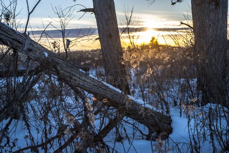 Holz bei Sonnenuntergang stockbilder