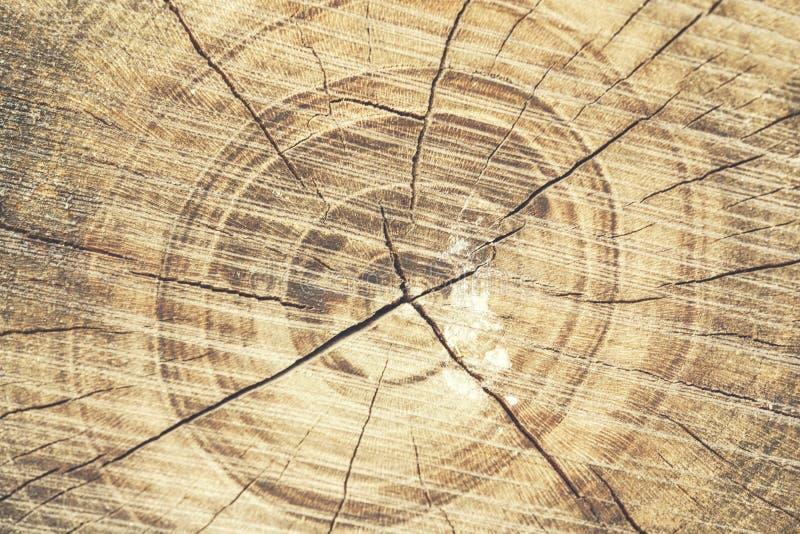 Holz in der Natur lizenzfreies stockfoto