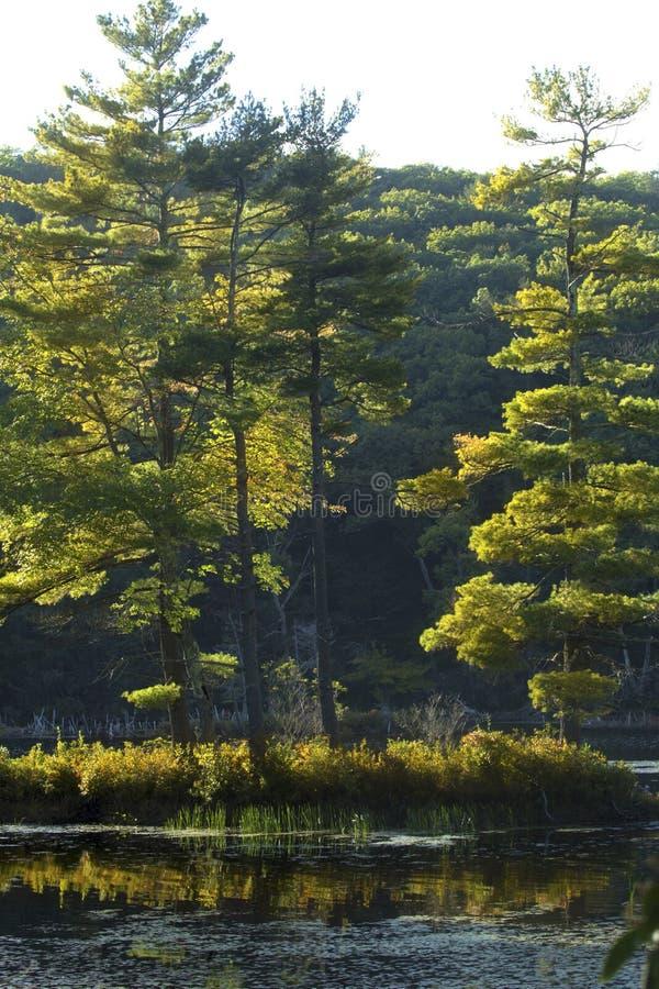 Holz in halsbrecherischem Teich im frühen Herbstlaub in Connecticut stockfoto