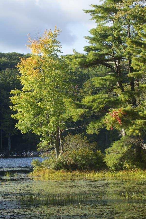 Holz in halsbrecherischem Teich im frühen Herbstlaub in Connecticut lizenzfreie stockfotografie