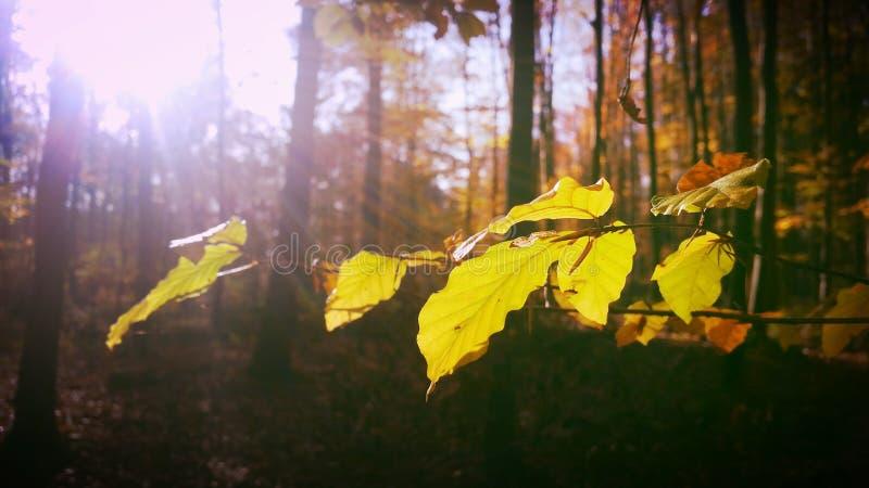 Holz im Fall stockfotos