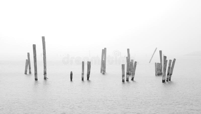 Holz im Wasser stockfotos