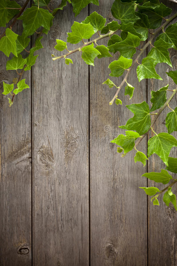 Holz-und Efeu-Hintergrund stockbilder