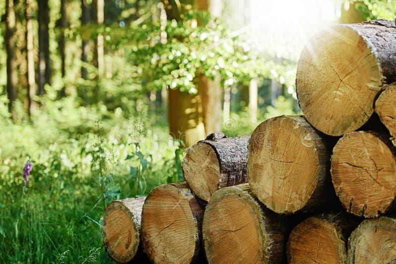 Holz- und Forstwirtschaft im Wald lizenzfreie stockbilder