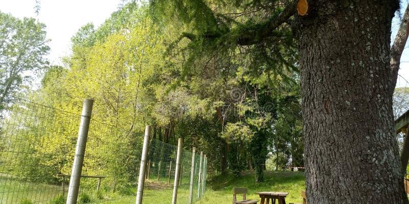 Holz und Himmel lizenzfreies stockfoto