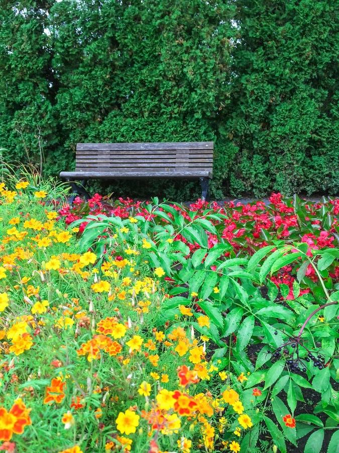 Holzbank in blühendem Sommergarten stockfotografie