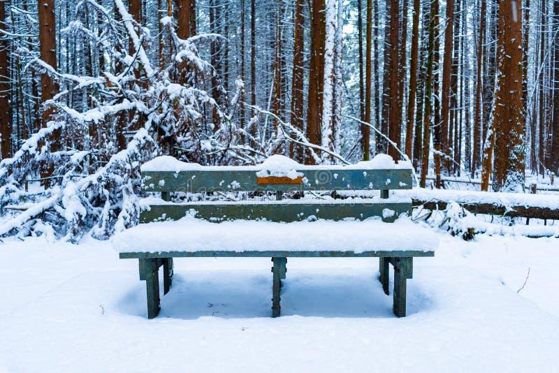 Holzbank in einem Wald bedeckt in schneebedecktem nach einem Schneesturm, mit immergrünen Bäumen und flaumigem Schnee im Hinter lizenzfreies stockbild