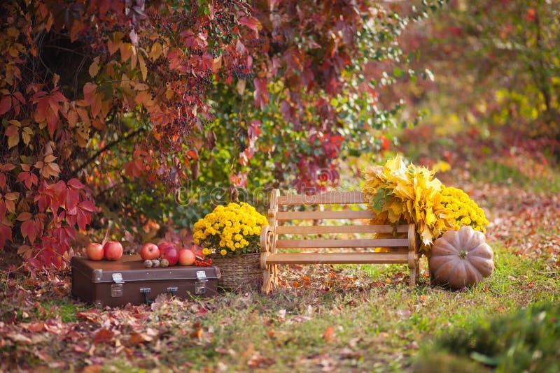 Holzbank im Herbstpark, ein Kasten, Blumen, Kürbise mit Äpfeln, atmosphärischer Herbst stockfotografie
