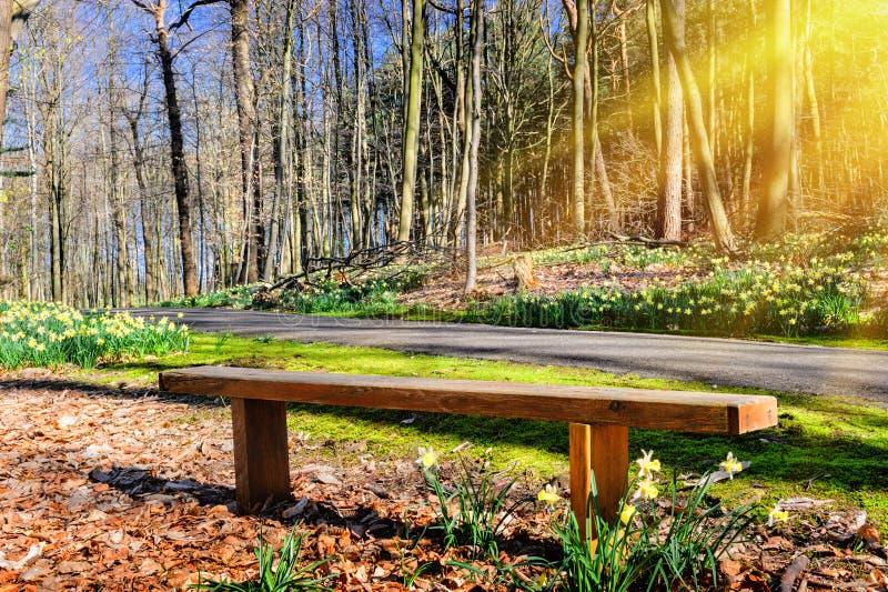 Holzbank im sonnigen Frühlingspark lizenzfreies stockbild