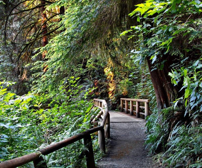 Holzbrücke auf einem Wanderweg lizenzfreies stockfoto